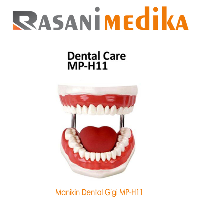 Manikin Dental Gigi MP-H11