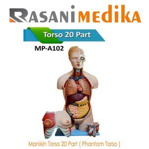 Manikin Torso 20 Part ( Phantom Torso )