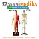 Manikin Torso Fullbody & Skeleton ( Phatom Full Body )